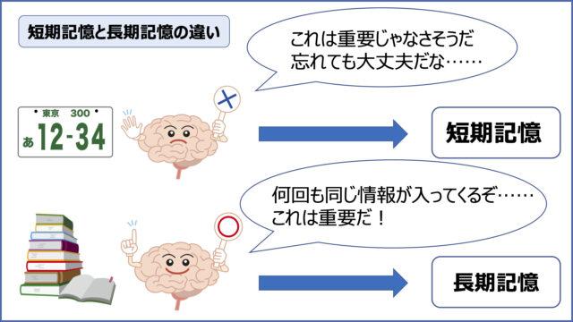 「記憶力」右脳速読で、短期記憶から長期記憶へ移行しやすくなる