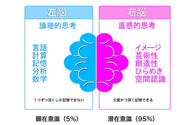 左右の脳、それぞれの得意分野とは